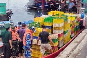 Tàu chở 35.000 con vịt giống nhập lậu từ Trung Quốc