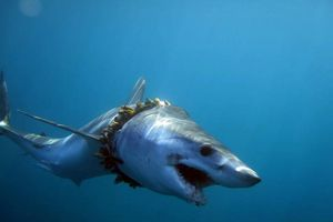 Rác thải nhựa tấn công sự sống trong môi trường biển