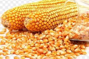 'Ngô hạt' và 'khô dầu đậu nành' không được miễn thuế NK