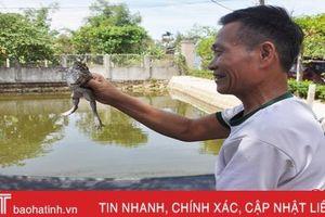 Dễ như nuôi ếch 'sạch' ở Cẩm Bình