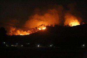 Khởi tố 3 nông dân dùng lửa đốt ong, cháy cả cánh rừng tại Hà Tĩnh