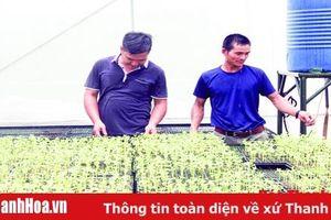 Hiệu quả thực hiện chính sách hỗ trợ sản xuất giống cây trồng, vật nuôi