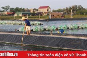 Hỗ trợ gần 1,8 tỷ đồng kinh phí thuê đất, thuê mặt nước sản xuất tập trung