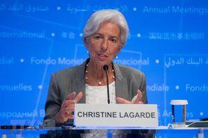 Tổng giám đốc IMF đệ trình đơn từ chức