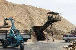 Dăm gỗ xuất khẩu chết kẹt vì Trung Quốc