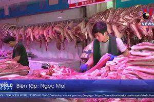 Trung Quốc xác định ổ dịch tả lợn châu Phi mới