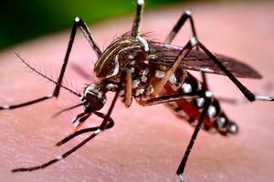 Số ca sốt xuất huyết tăng mạnh tại các tỉnh phía Nam