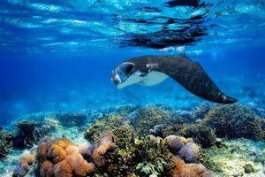 Mổ bụng cá đuối 'khủng', hốt hoảng thấy điều rợn người, đáng xấu hổ...