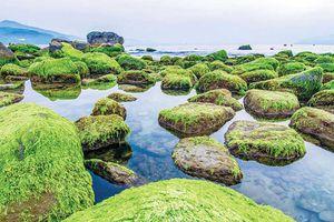 Chiêm ngưỡng cảnh đẹp ngỡ ngàng của ghềnh đá Nam Ô mùa rêu xanh mướt