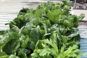 Sân thượng 30m2 phủ xanh đủ loại rau quả sạch của bà mẹ đảm đang ở quận 9, TP. HCM