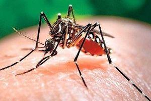 Hơn 80.000 ca mắc sốt xuất huyết từ đầu năm 2019, Bộ Y tế ra cảnh báo khẩn