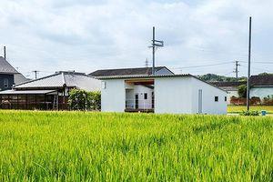 Nhà một tầng siêu đẹp giữa cánh đồng, chan hòa với thiên nhiên