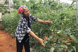 Phát triển nông nghiệp hữu cơ, bảo đảm an toàn cho người sử dụng và môi trường