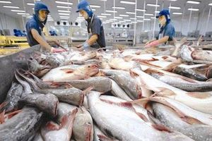 Cá tra Việt 'tấn công' thị trường ASEAN, xuất khẩu tăng mạnh