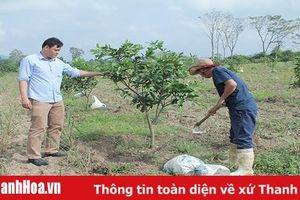 Kết quả bước đầu từ sản xuất nông nghiệp ứng dụng công nghệ cao tại huyện Thường Xuân