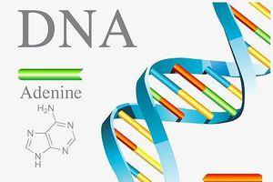 Giải mã bộ gen người sẽ, nhanh thực hành y học chính xác