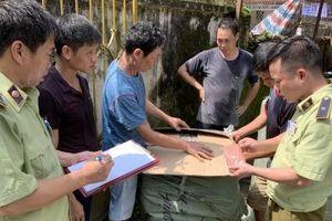 Thu giữ 300kg hạt giống rau cải nhập lậu từ Trung Quốc