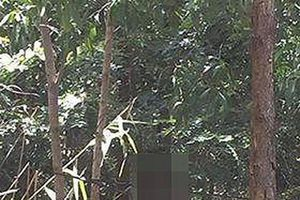 Vào rừng hái măng, phát hiện thi thể người đàn ông đang phân hủy trong tư thế treo cổ