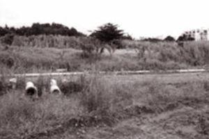 Đất dự án để hoang, quyền lợi người dân bị 'treo' đến bao giờ?