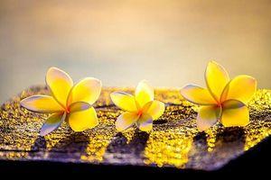 Phật dạy: Ba điều nhất định phải biết trong cuộc đời