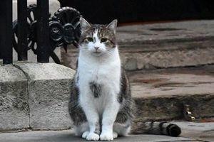 Nước Anh có thủ tướng mới, người dân lại gọi tên mèo Larry
