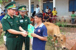 Tặng bò giống cho người nghèo biên giới Việt - Lào