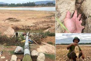 Người dân Nghệ An 'quay cuồng' vì hạn hán, ruộng đồng nứt toác, cá chết khô