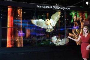 Xuất khẩu màn hình OLED của Hàn Quốc sang Nhật Bản tăng cao kỷ lục