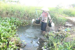 Đà Nẵng: Khô hạn, nước nhiễm mặn, người dân làng rau La Hường điêu đứng