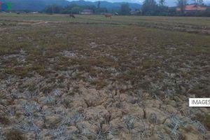 Lào đối mặt với đợt hạn hán kỷ lục do mức nước sông Mekong xuống thấp