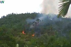 Cháy rừng Vân Canh (Bình Định) có thể do người dân đốt ong lấy mật