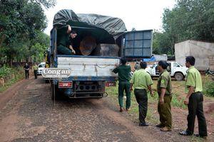 Lật lại vụ án vận chuyển 5 xe gỗ lậu khủng 3 năm trước