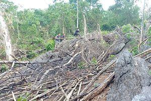 Điện Biên: Hạt Kiểm Lâm Tủa Chùa có 'nhầm lẫn' trong xử lý vụ 'phá rừng' ở Trung Thu?