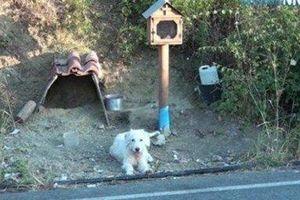 Chú chó kiên nhẫn chờ đợi chủ suốt 2 năm tại nơi gặp gỡ cuối cùng