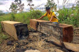 Ai chịu trách nhiệm vụ công trường phá rừng ở Gia Lai