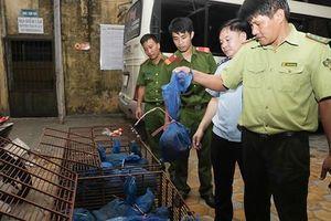 Xe khách 'chế' khoang hầm dưới ghế cất giấu 30 cá thể tê tê từ Lào về Việt Nam