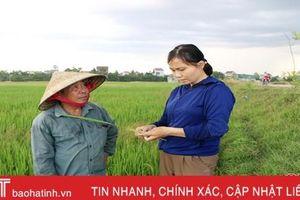 Ruộng đồng Hà Tĩnh 'ngóng' mưa - cứu hơn 44.000 ha lúa hè thu khô hạn