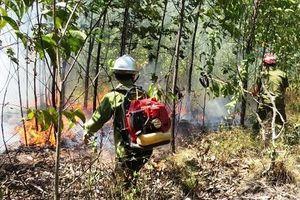 Cháy 20 ha rừng trồng của người dân tại Thừa Thiên - Huế