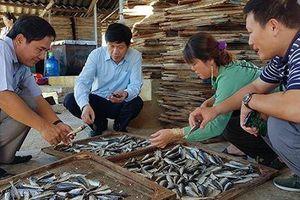 Vì sao Quảng Trị tồn kho cả ngàn tấn cá nục khô?