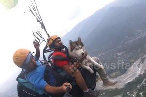 Chó nhảy dù lượn ở độ cao hơn 1.000 m