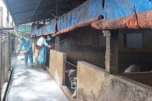 Hà Nội: 147 xã, phường đã qua 30 ngày không phát sinh bệnh dịch tả lợn châu Phi