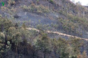 Khởi tố nam thanh niên nhiều lần đốt rừng