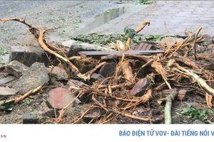 Đánh chuyển một số cây sưa trên đường Trần Hưng Đạo, Hà Nội