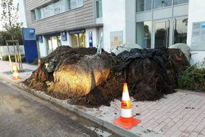 Nông dân đổ 2 tấn phân bón trước văn phòng nghị sĩ Pháp