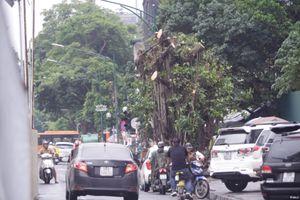 Hà Nội di dời cây xanh trên phố Trần Hưng Đạo-Cát Linh để thi công ga ngầm đường sắt