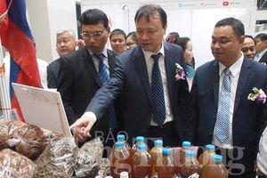 Thúc đẩy thương mại, du lịch và đầu tư hành lang kinh tế Đông Tây – Đà Nẵng 2019