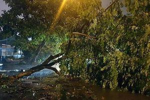 Bão Wipha vào Quảng Ninh, Bắc Bộ mưa lớn