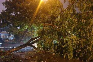Thiệt hại do bão số 3: Hàng loạt cây xanh bị quật đổ, nhiều tuyến đường ngập nước
