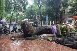 Loạt cây xanh trên phố Hà Nội đổ rạp do bão số 3