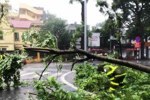 Hà Nội: Hàng loạt cây xanh, cột điện nghiêng đổ do bão số 3